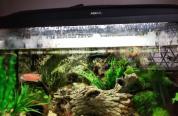 110L akwarium z pe�nym wyposażeniem i ryba