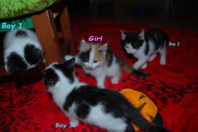 Sliczne kociaki -czytaj opis