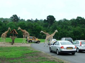 West Midlands Safari Park